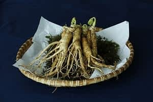 Asian Ginseng vs American Ginseng - Yellow Ginseng Stock Shot