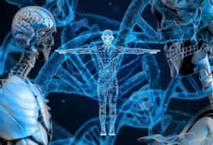 Is Choline a Nootropic - Modern Version of The Vitruvian Man