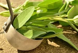 Is Sage a Nootropic - Sage Leaves in a Ladle