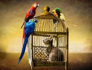 How does CoQ10 Benefit the Brain - Cat in Bird Cage with Birds on Cage