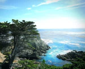 What does Pine Bark Extract do - Pinus Pinaster Close to Ocean