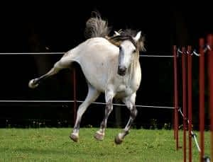 Phosphatidylserine and Sleep - What's the Connection - Pony Doing a Trick