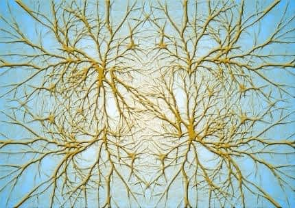 Is Sage a Nootropic - Cluster of Neurons