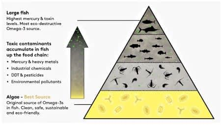 Food chain pyramid illustration for Performance Lab Omega 3 review.