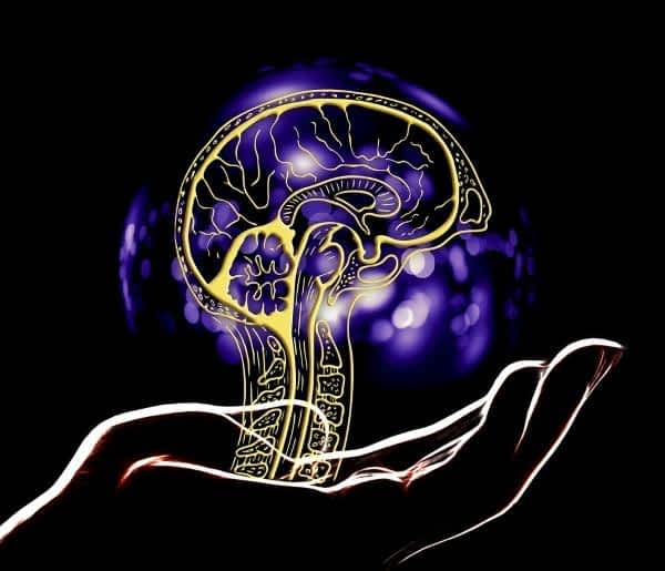 Best Supplements for Neuroplasticity - Glowing Brain Structure Supported by Hand